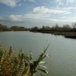 Reserva natural dirigida de los Sotos y Galachos del Ebro
