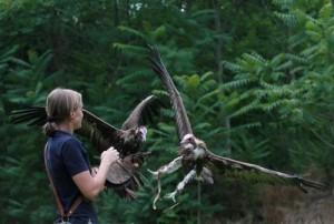 monasterio-de-piedra-exhibición-de-aves-rapaces